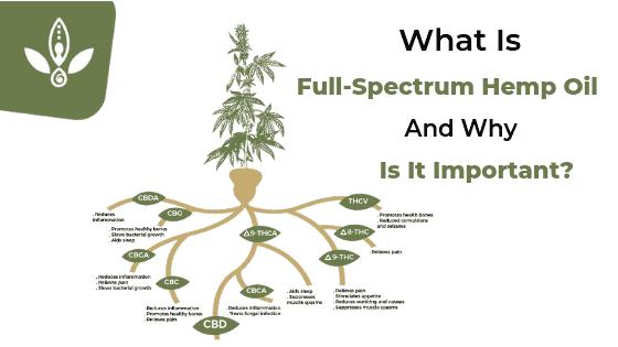 what is full spectrum hemp oil diagram