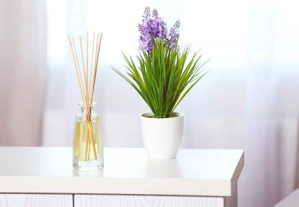 reed oil diffuser beside pot plant on white wooden bench