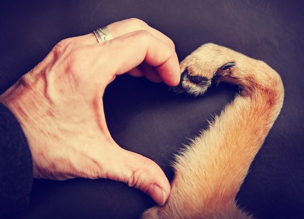 a person and a dog making a heart shape with the hand and paw toned with a retro vintage filter